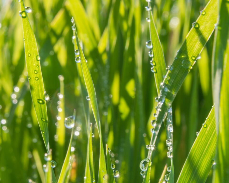 AD_Realba oat field_ot1_39132 - droits tous supports - monde jusqu_au 1er sept 2023