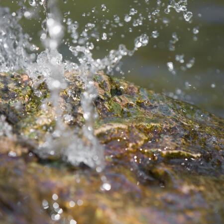 av_instit-biodiversity-orb-hdrvb-square