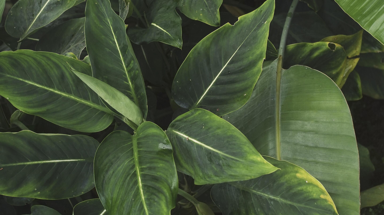 rf_generic-vegetal_website_filter -1-