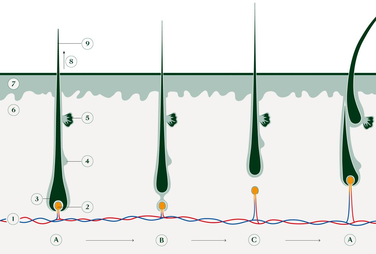 rf-cycle-4phases