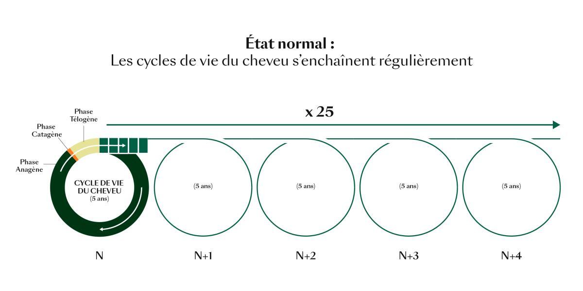 rf-cycle-de-vie-du-cheveu_etat-normal