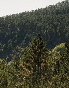 av_instit-impluvium-forest-hd