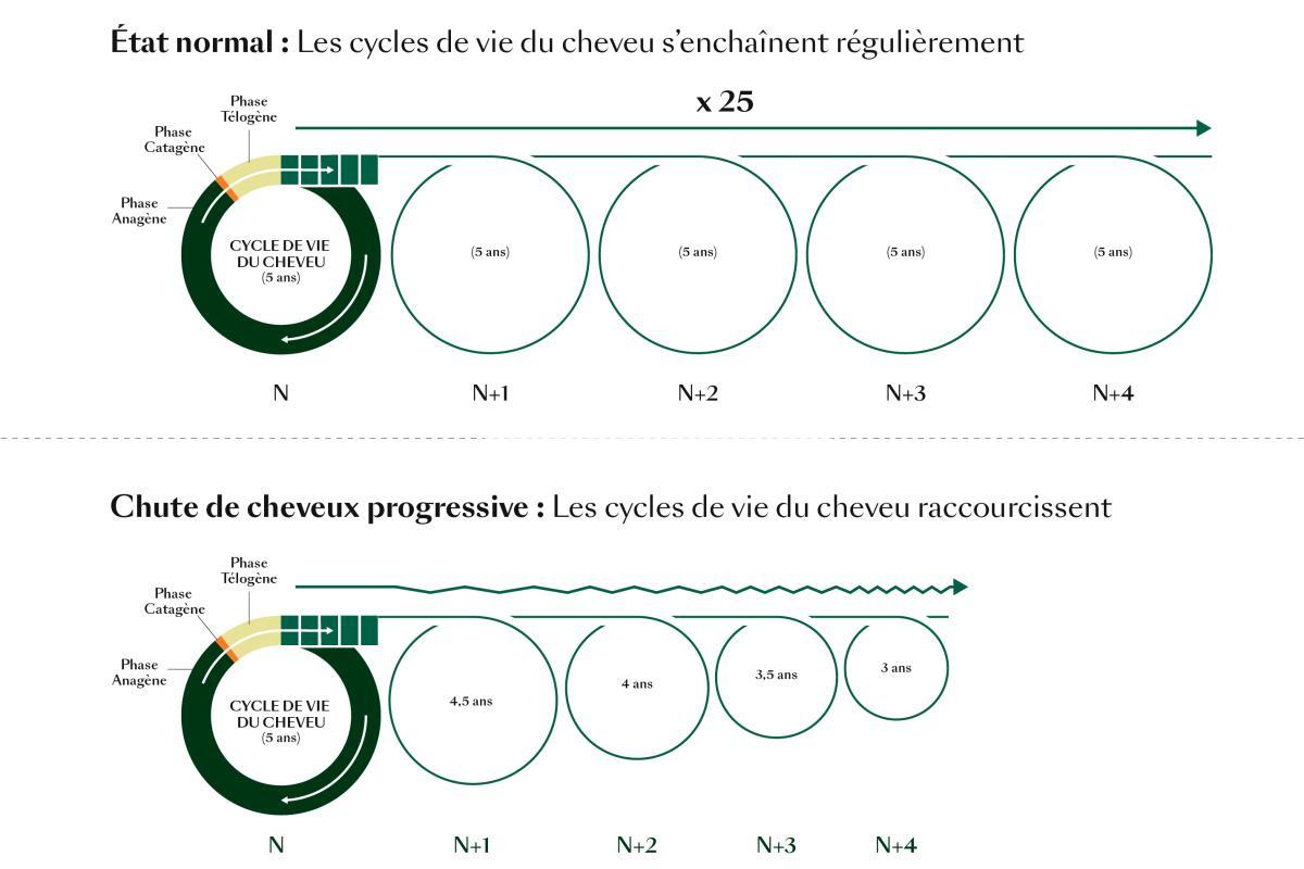 rf-cycles-de-vie-du-cheveu_comparaison