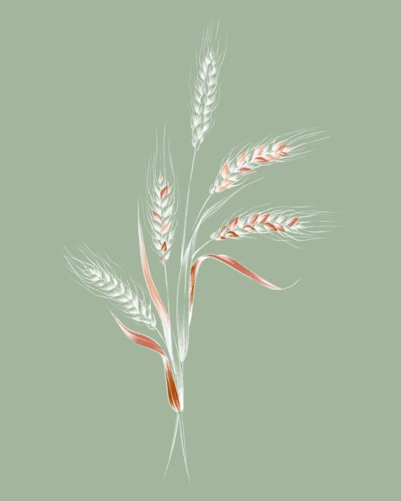 rf_mag_ri_plantbasedkeratin_principal_visual_1-1