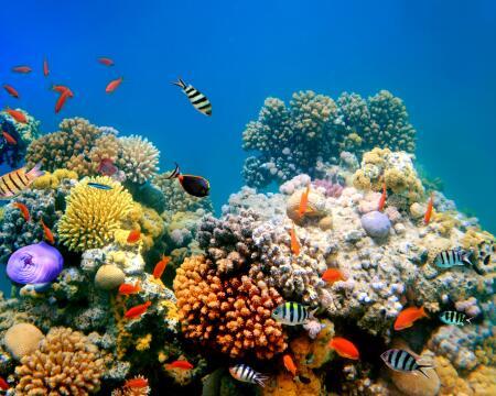 av_ocean-respect-fish-coral