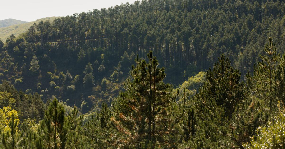 av_instit-impluvium-forest-hdrvb