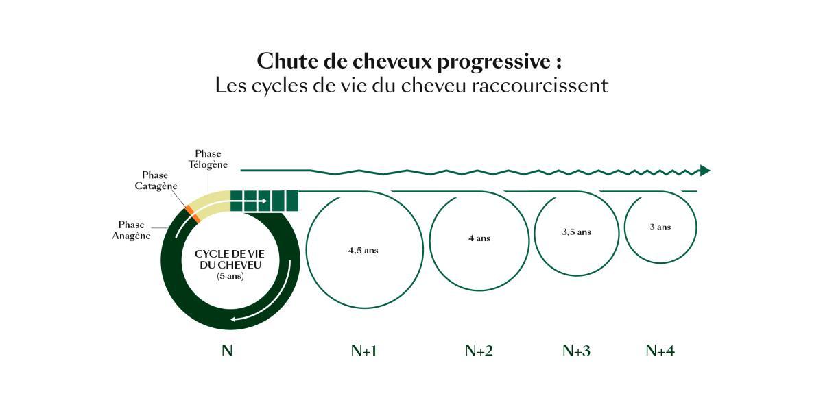 rf-cycle-de-vie-du-cheveu_chute-progressive
