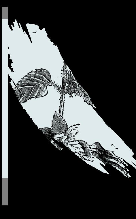 kl_aquatic-mint_active-ingredient_engraving_756x472px
