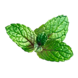 kl_aquatic-mint_active-ingredient_semantic-cocoon_expandable-fragment_200x200px