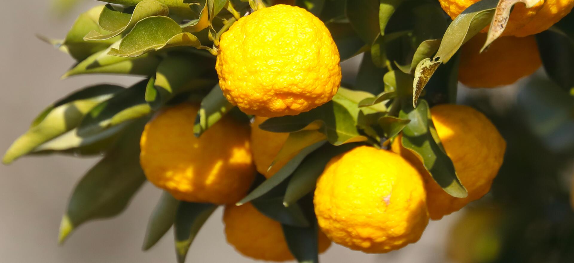 kl_citrus_actif_picture