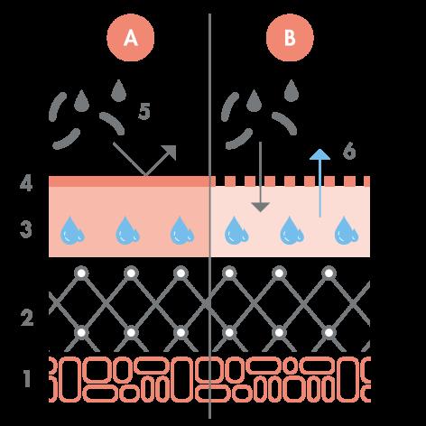 av_peaux-sensibles_schema_barriere-cutanee_1x1