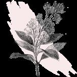 kl_quinine_active-ingredient_engraving_300x300px