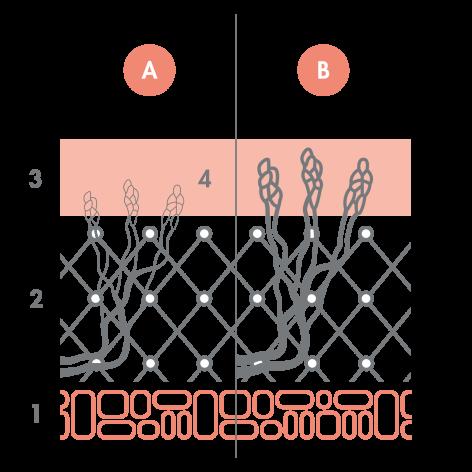 b2_av_peaux-sensibles_schema_dilatation_vaisseaux-sanguins_1x1_v3