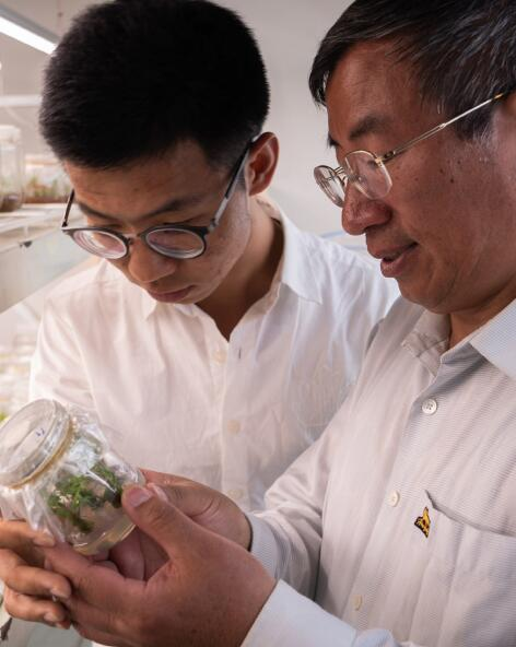 KL_BODY_PEONY_Institute of Botany_Picture_scientist_2020