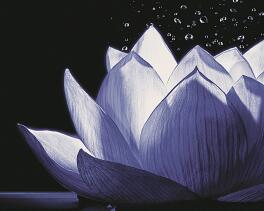 Lotus-Mineral-Complex™