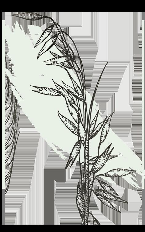 kl_oat_active-ingredient_engraving_756x472px