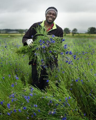 kl_cornflower_active-ingredient_field_plant_2020-9-